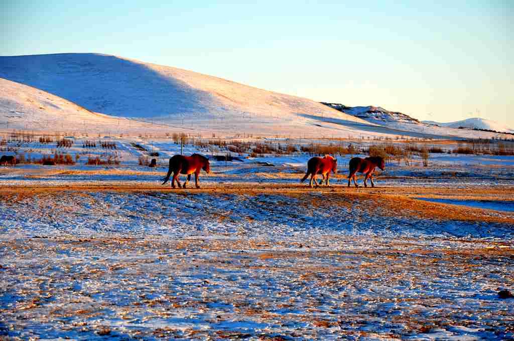 坝上草原冬天能玩吗