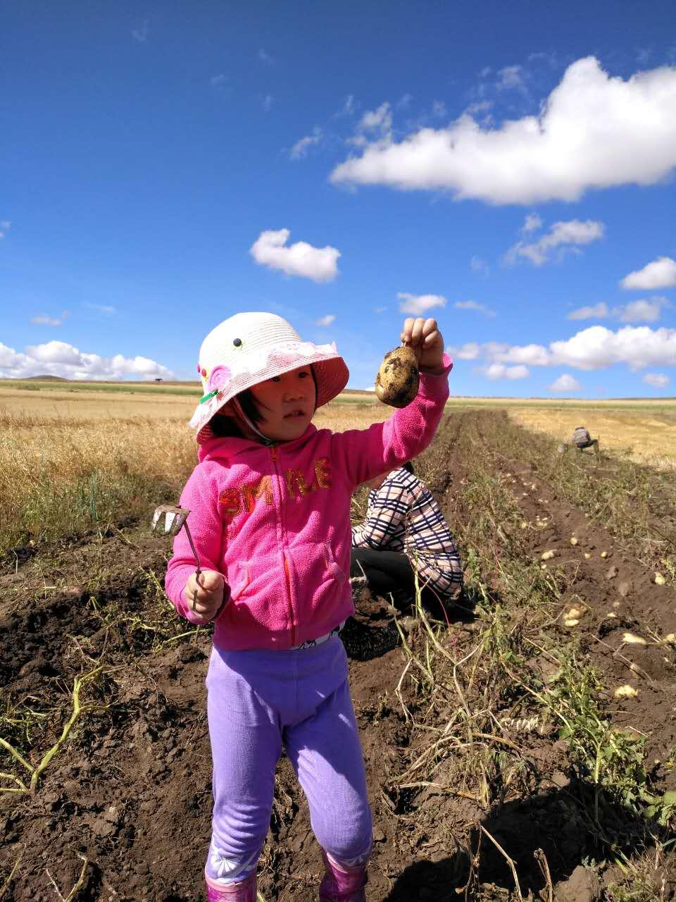 坝上草原谁家可以挖土豆,白家大院可以。
